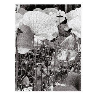 Carte Postale Étang de Lotus, photographie noire et blanche