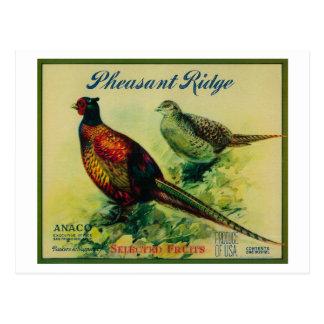 Carte Postale Étiquette de caisse de Ridge Apple de faisan