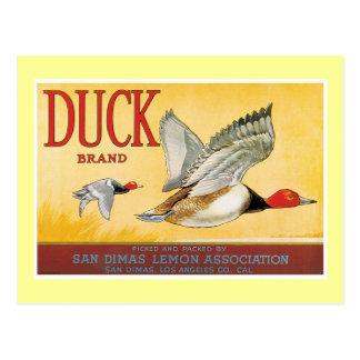 Carte Postale Étiquette vintage de citron de canard