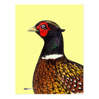 Carte Postale Faisan :  Tête de Ringneck