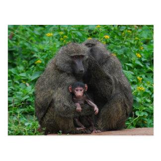 Carte Postale Famille de babouin