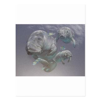 Carte Postale Famille de lamantin