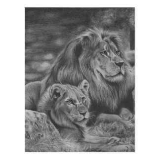Carte Postale Famille de lion