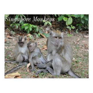 Carte Postale Famille de singe de Singapour