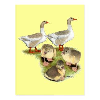 Carte Postale Famille d'oie de Pomeranian