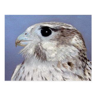 Carte Postale Faucon de prairie