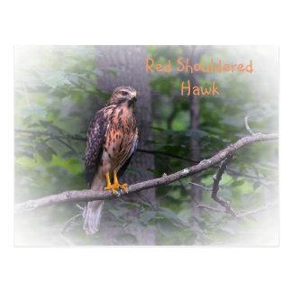Carte Postale Faucon épaulé rouge