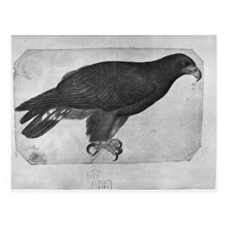Carte Postale Faucon, le de l'album de Vallardi
