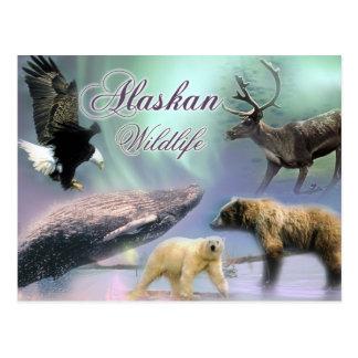 Carte Postale Faune d'Alaska