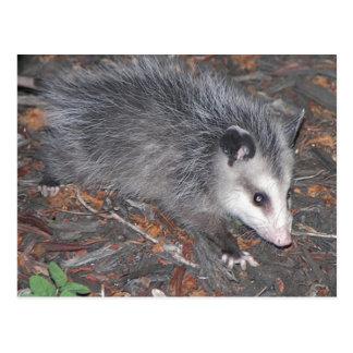 Carte Postale Fermez-vous du joli opossum