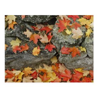 Carte Postale Feuille d'automne sur le mur en pierre, homme
