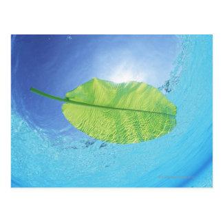 Carte Postale Feuille de banane flottant sur la mer