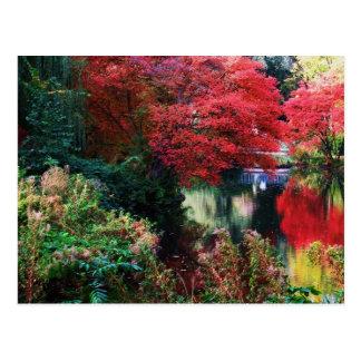 Carte Postale Feuille de couleurs et d'automne de chute