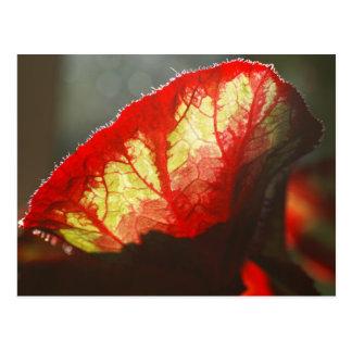 Carte Postale Feuille rouge brillante