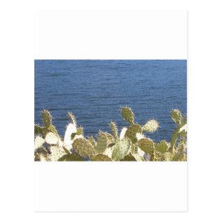 Carte Postale Figue de Barbarie sur le lac