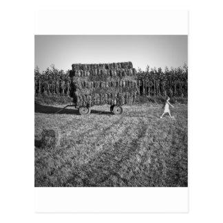 Carte Postale Fille dans la prairie de fauche