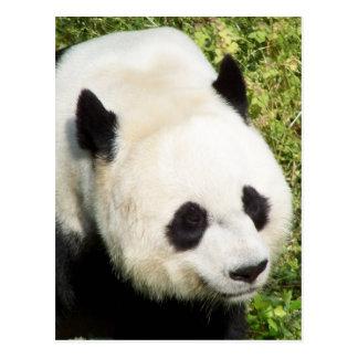 Carte Postale Fin de panda géant vers le haut de portrait