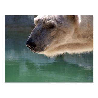 Carte Postale Fin d'ours blanc vers le haut de portrait