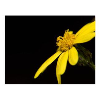 Carte Postale fiore