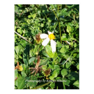 Carte Postale Fleur-Carte postale blanche sauvage
