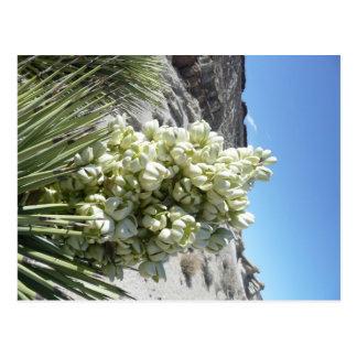 Carte Postale Fleur d'arbre de Joshua