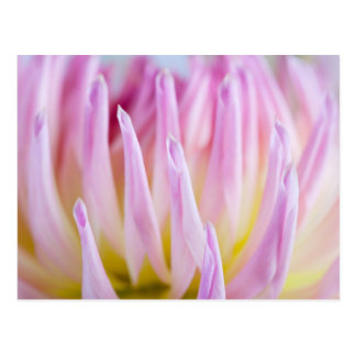 Carte Postale Fleur de dahlia
