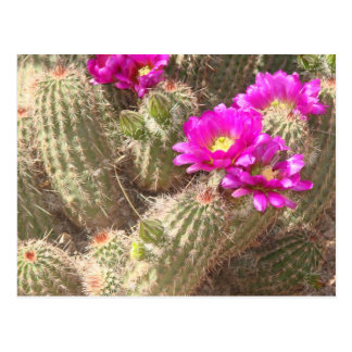 Carte Postale Fleur de désert