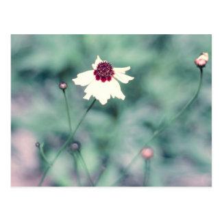 Carte Postale Fleur de floraison de photographie de ressort