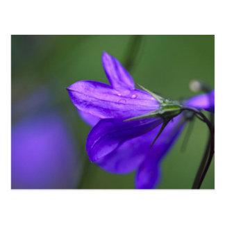 Carte Postale Fleur de jacinthe des bois dans le passage de