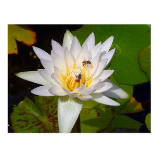 Carte Postale Fleur de Lotus thaïlandaise pâle