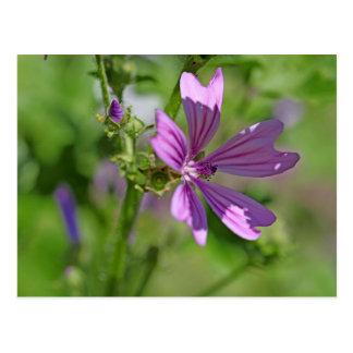 Carte Postale Fleur de mauve commune