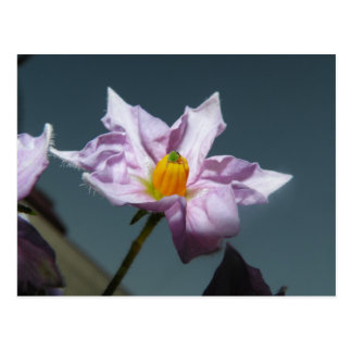 Carte Postale Fleur de pomme de terre