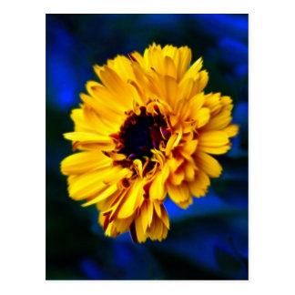 Carte Postale Fleur d'or et signification de souci
