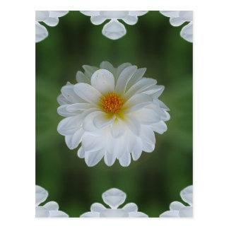 Carte Postale Fleur et signification de dahlia