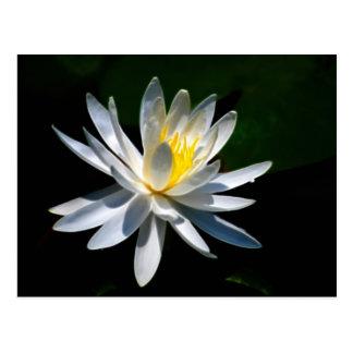 Carte Postale Fleur et signification de Lotus