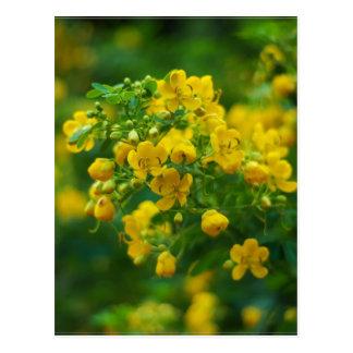 Carte Postale Fleur-Nouvelle année de prune jaune