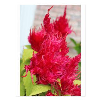Carte Postale Fleur rose de lave