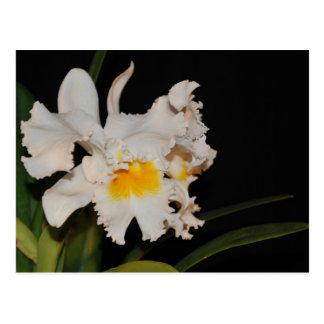 Carte Postale Fleur sauvage tropicale blanche d'orchidée de