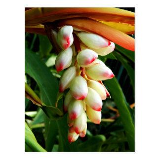 Carte Postale Fleur tropicale exotique luxuriante