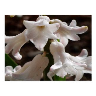 Carte Postale Fleurs blanches de jardin