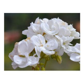 Carte Postale Fleurs chez Ténérife