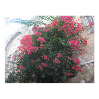Carte Postale Fleurs dans le quart juif