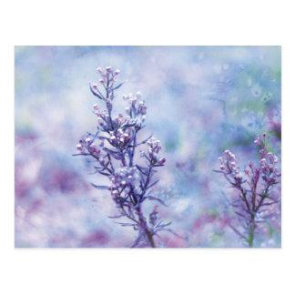 Carte Postale Fleurs de floraison de photographie de ressort