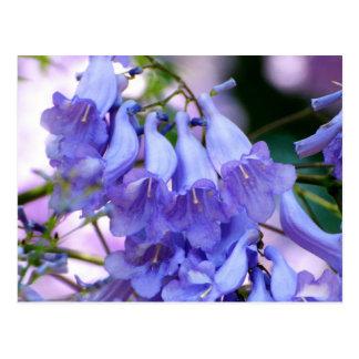 Carte Postale Fleurs de Jacaranda