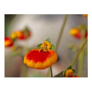 Carte Postale Fleurs de la fleur de la bourse d'une dame