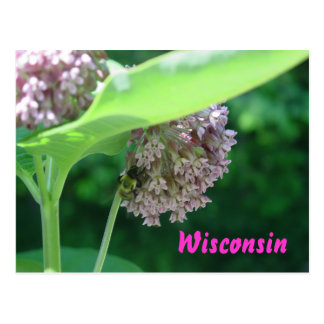 Carte Postale Fleurs de Milkweed