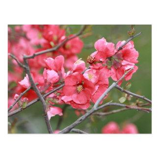 Carte Postale Fleurs de pomme sauvage