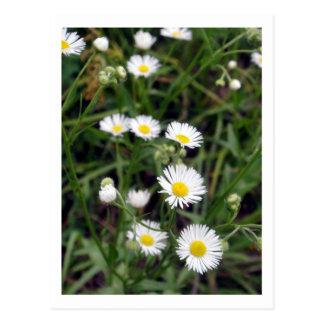 Carte Postale fleurs de prairie
