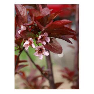 Carte Postale fleurs de prune