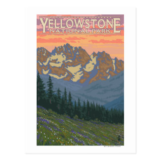 Carte Postale Fleurs de ressort - parc national de Yellowstone